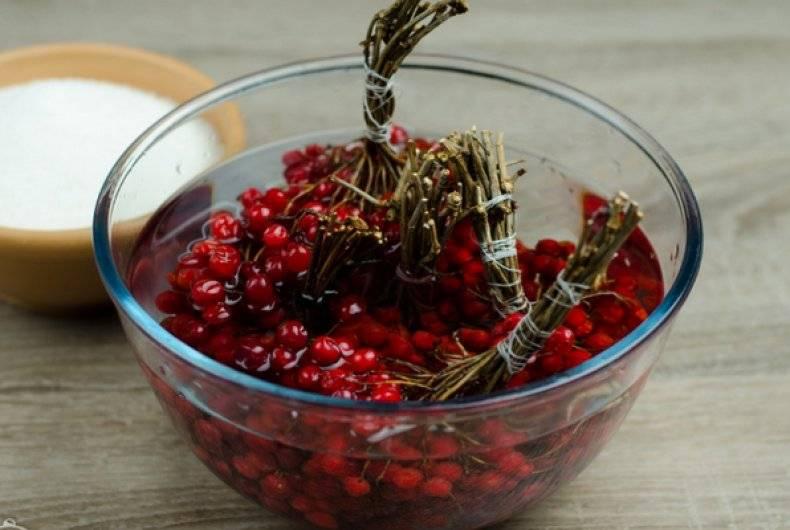 Лечение косточками калины красной: полезные свойства и рецепты