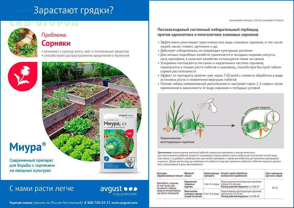 Гербициды от сорняков — виды и рекомендации по применению