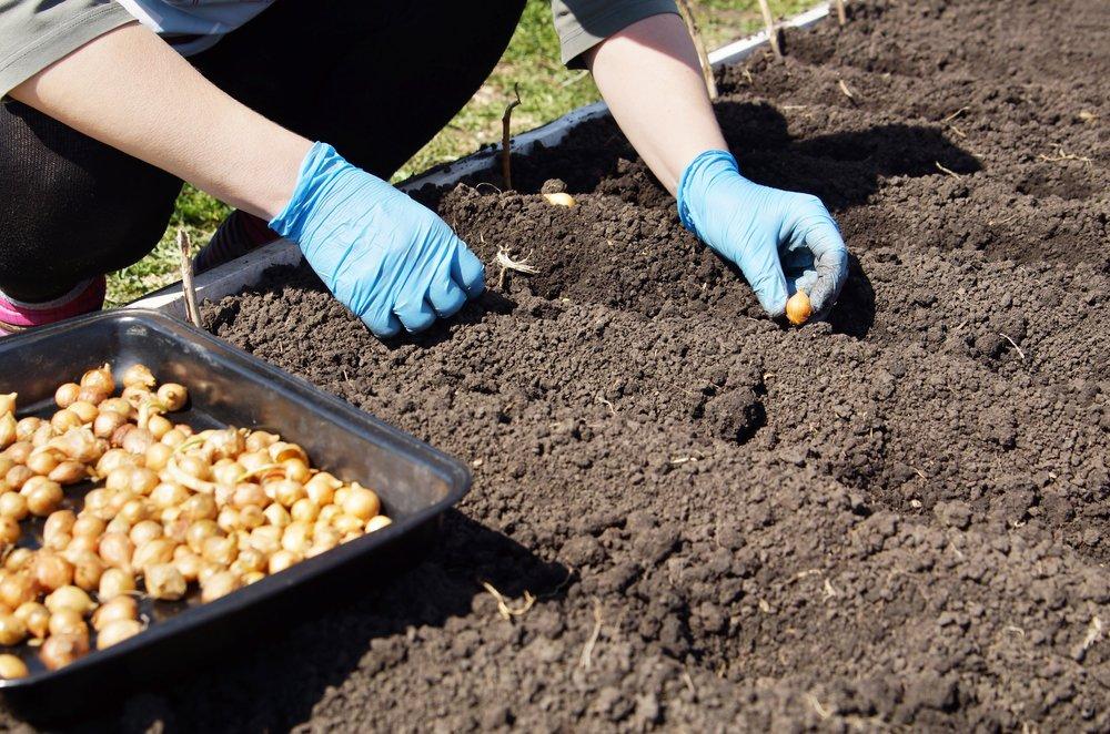 Выращивание овощей в открытом грунте: правильный выбор участка и подготовка семян