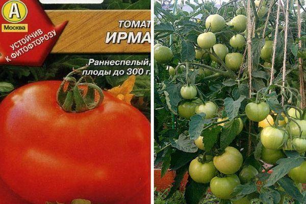 Томат кемеровец - описание сорта, характеристика, урожайность, отзывы, фото