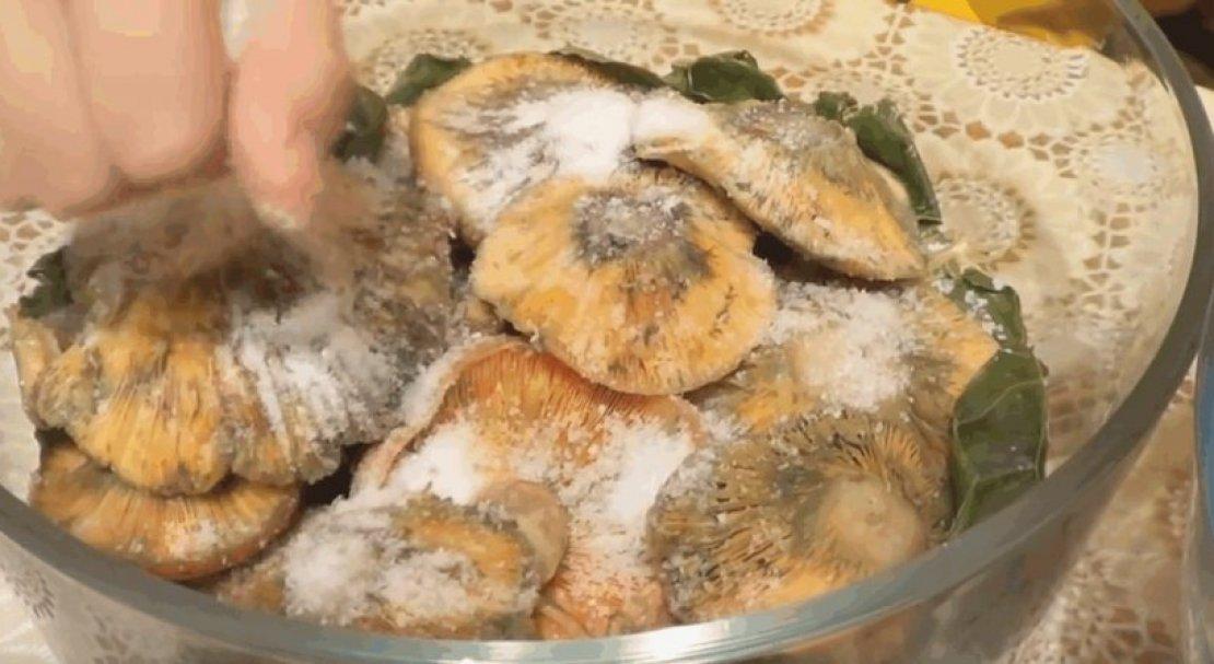 Как мариновать рыжики на зиму в банках: простые рецепты с фото пошагово