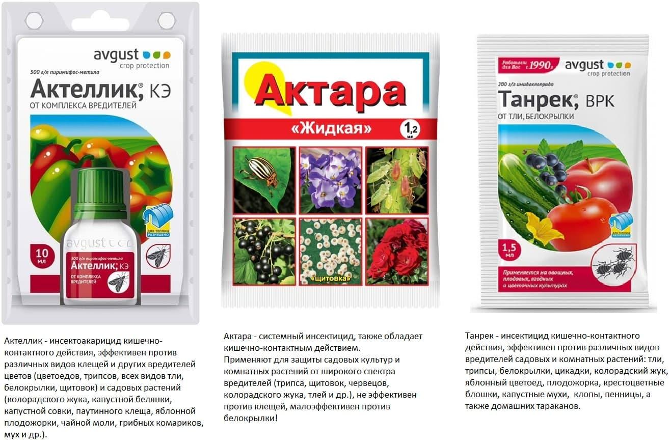 Инсектицид Актеллик: область применения и особенности использования
