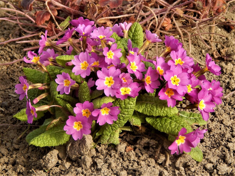 Разновидности весенних цветов, правильная посадка и уход за клумбами весной
