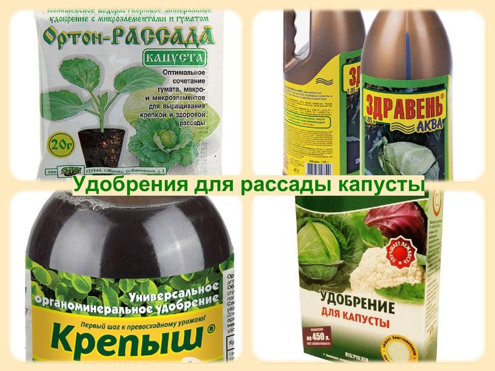Цветная капуста в открытом грунте: как высаживать и ухаживать после высадки рассады, чем подкормить, как поливать и окучивать