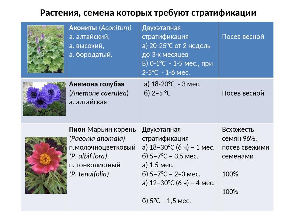 Стратификация семян в домашних условиях - что это такое и как ее сделать
