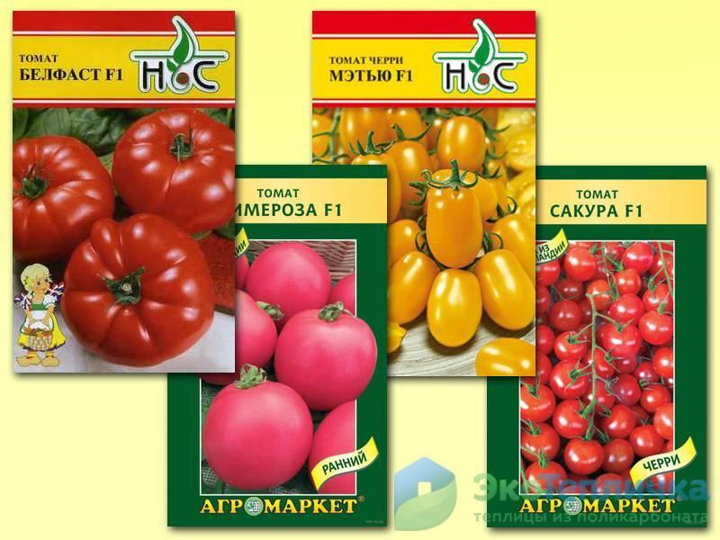 Как выращивать томат цетус розовый