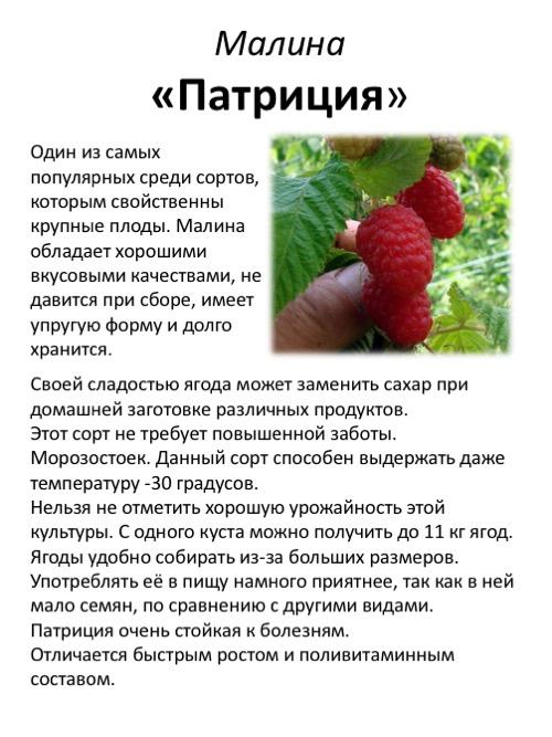 Описание сорта малины журавлик