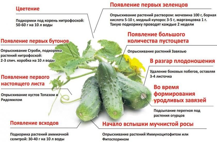 Как пересадить цветы из одного горшка в другой: правила и рекомендации - sadovnikam.ru