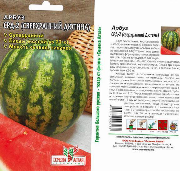 Описание и характеристики арбуза сорта холодок, правила выращивания