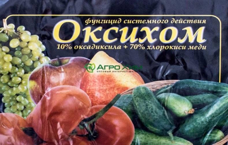 Оксихом: инструкция по применению, отзывы, когда обрабатывать растения от фитофторы, состав