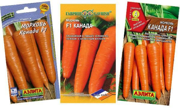 Морковь канада f1: описание, подробная характеристика, отличительные особенности, история происхождения, преимущества и недостатки и правила выращивания культуры русский фермер