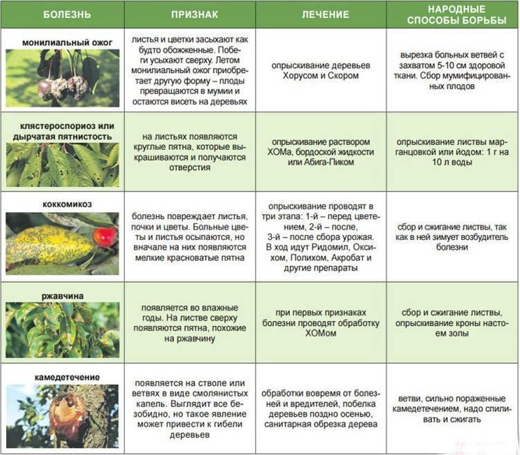 Выращивание роз в теплице: правильный уход и условия