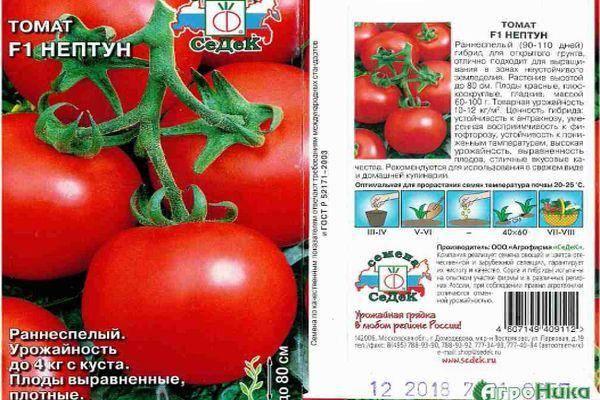 Характеристика и описание томата Нептун, советы по выращиванию