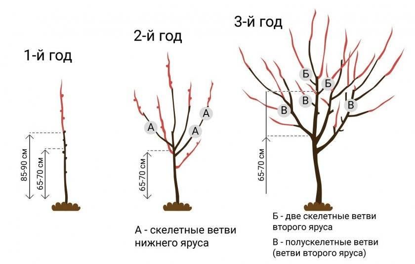 Сорта вишни для урала и сибири: описание 25 лучших, посадка и уход в открытом грунте