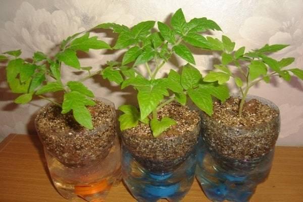 Необыкновенное средство для выращивания томатов — питательный раствор для гидропоники: необходимое оборудование