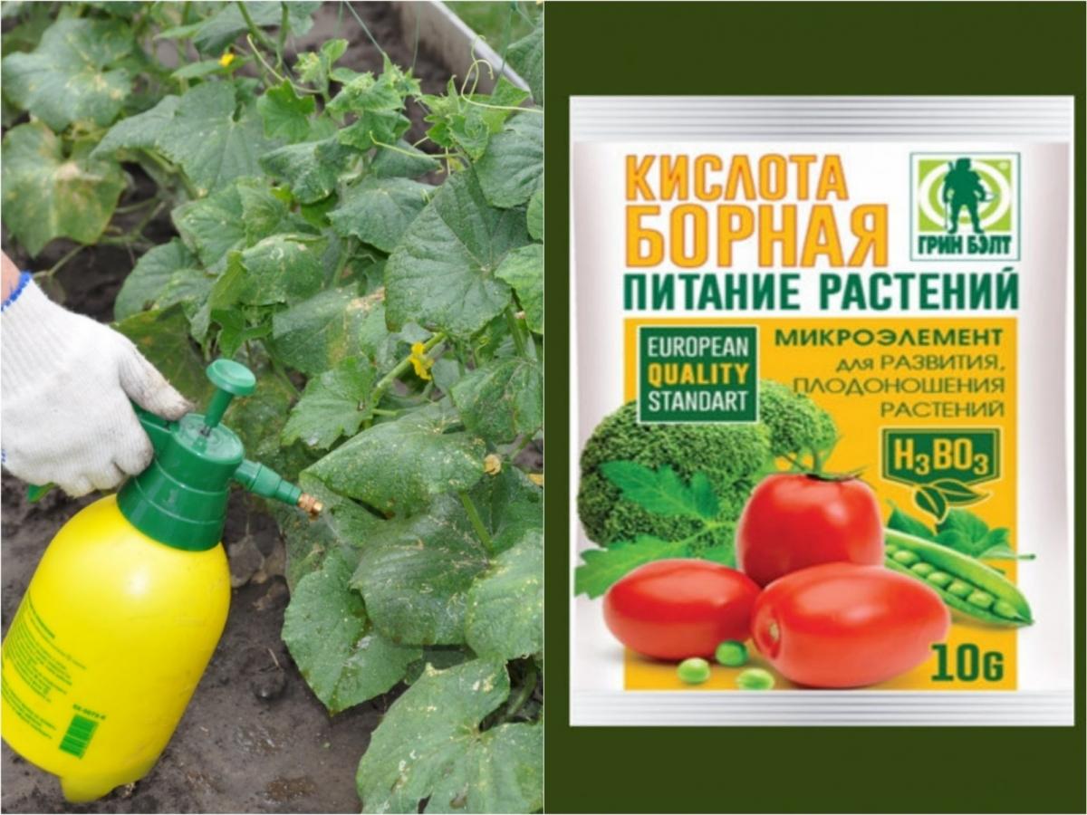 Подкормка рассады борной кислотой - точный рецепт, правильные дозировки в зависимости от вида растения, создание усвояемой формы