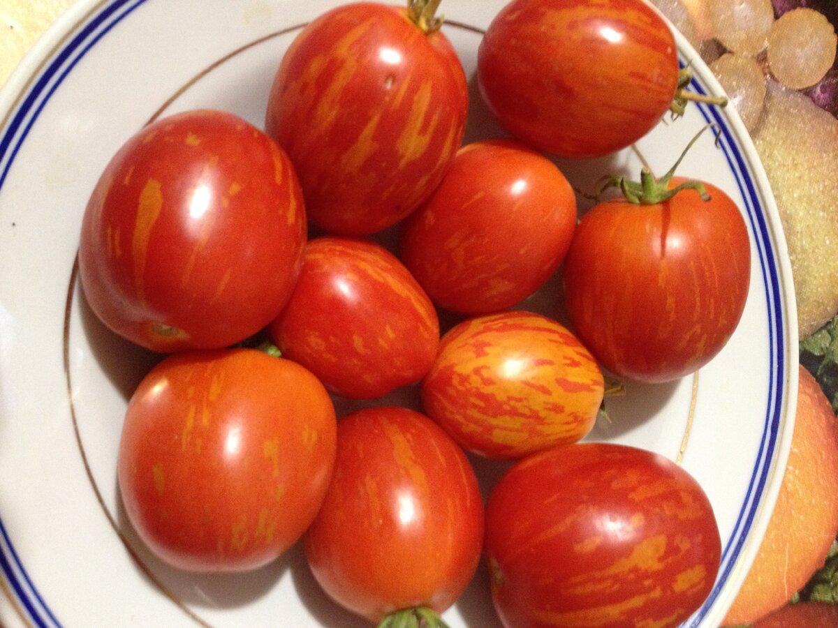 Характеристика сорта томатов пасхальное яйцо - агрономы