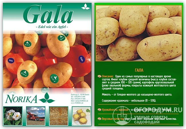 Сорт картофеля гала: характеристика, описание, отзывы | спутниковые технологии
