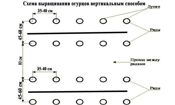 Лучшие схемы посадки огурцов в открытом грунте и теплице