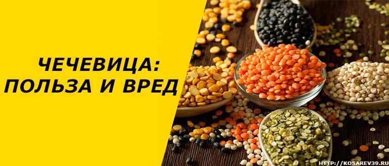 Чечевица – состав и калорийность, польза и вред для здоровья