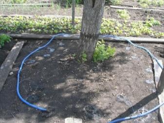 Правильный уход за яблоней летом. секреты опытных садоводов
