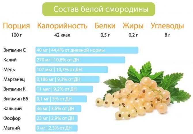 Белая смородина: полезные свойства и противопоказания, калорийность и вред для здоровья