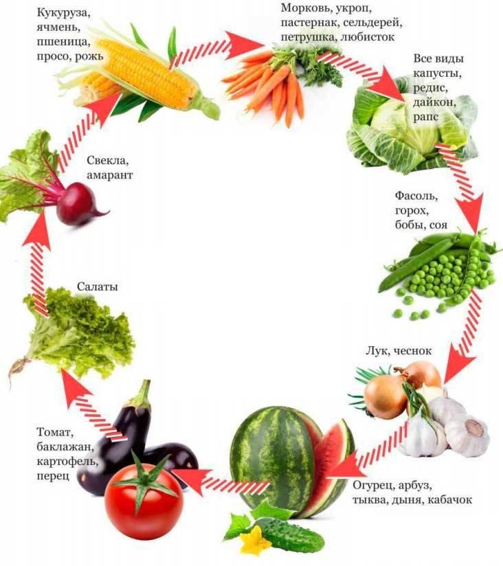 После чего можно сажать помидоры на следующий год: огурцы, перцы, лук, картофель или клубника - какие культуры помогут томатам лучше расти и наоборот? русский фермер