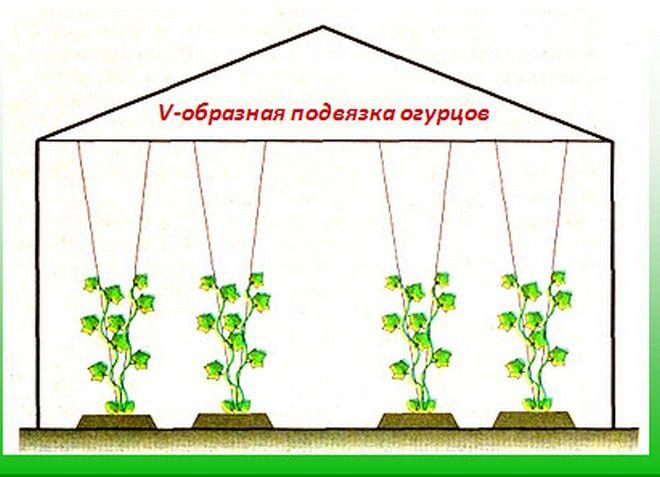 Пересадка огурцов в открытый грунт: пошаговая инструкция для начинающих садоводов и огородников (125 фото и видео)