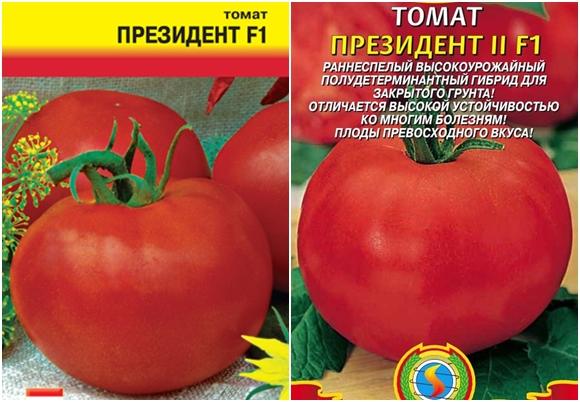 """Томат """"примадонна"""" f1: описание сорта и характеристика, выращивание и получение хорошей урожайности с куста, фото плодов-помидоров русский фермер"""