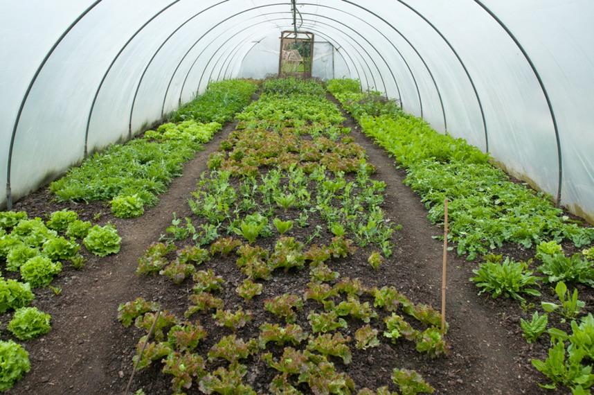 Когда и как сажать укроп семенами в открытый грунт: весной, летом и осенью под зиму