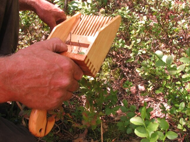 Как применяется комбайн для брусники и как сделать его своими руками