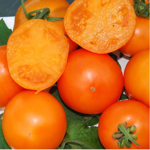 Характеристика и описание сорта томата мандаринка, его урожайность - всё про сады