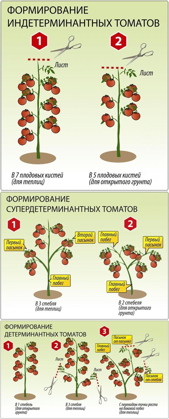 Пасынкование помидор в открытом грунте – дачные дела