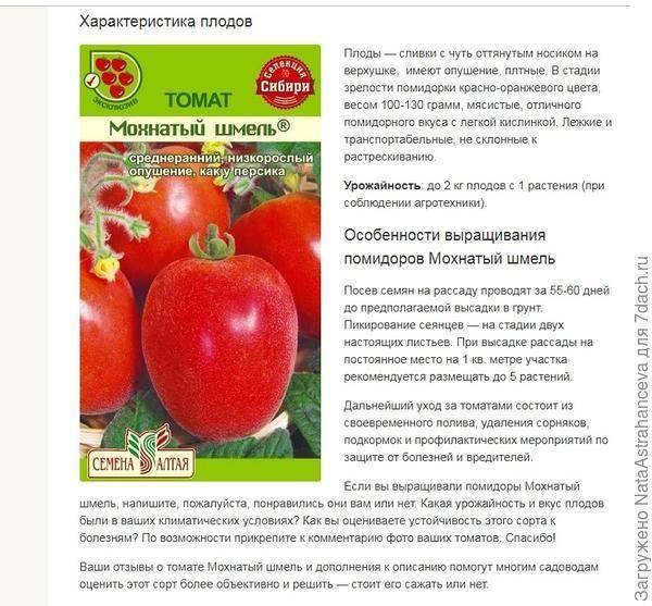 Томат мохнатый шмель: описание сорта, отзывы, фото   tomatland.ru