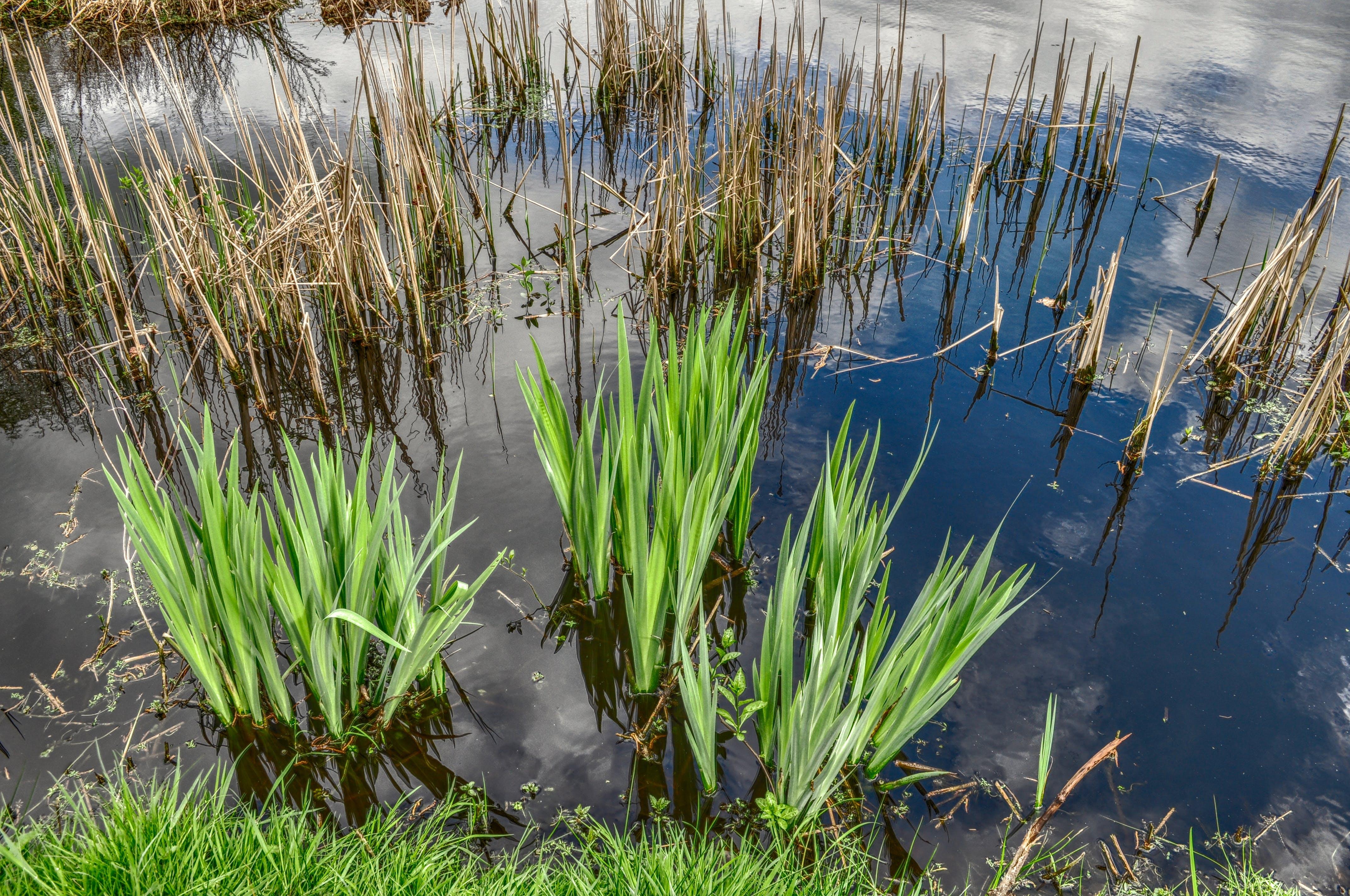Прибрежные растения в водоемах: камыш, рогоз и прочие