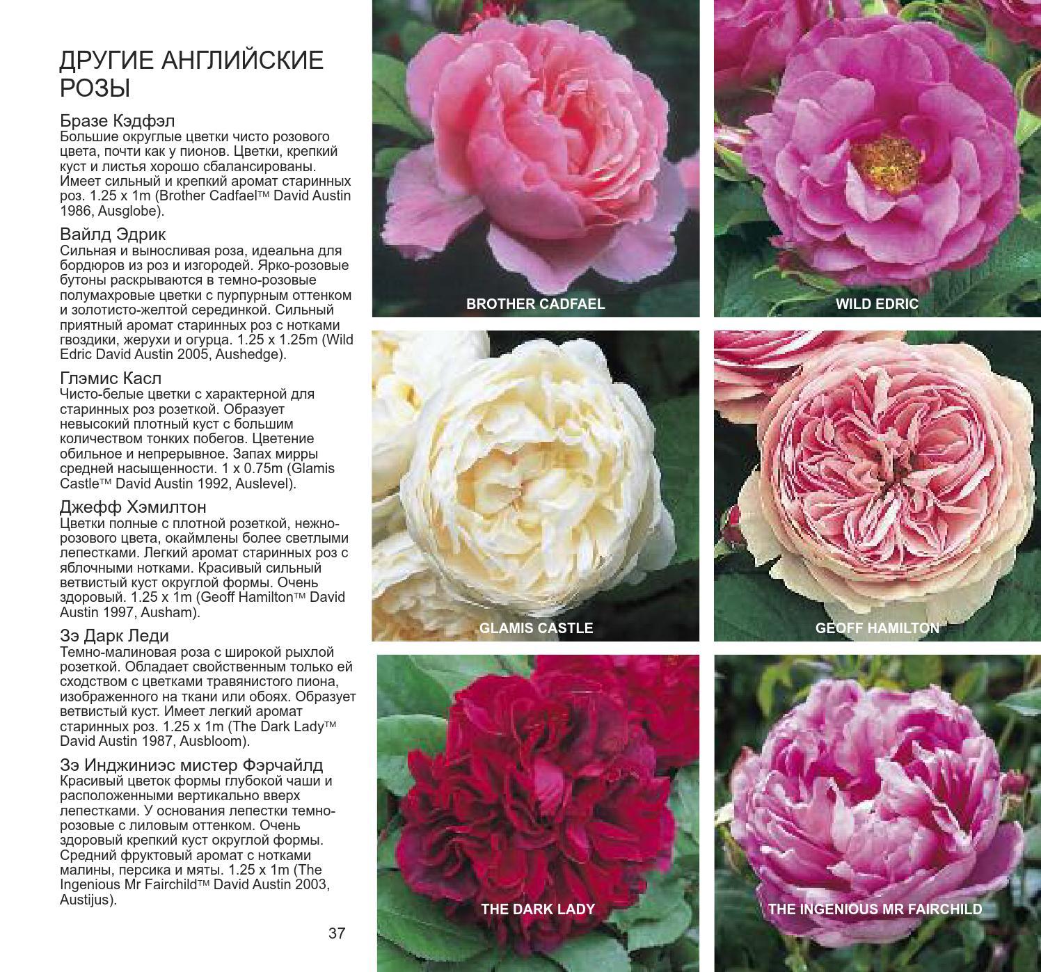 Виды и сорта роз - фото, названия и описания (каталог)