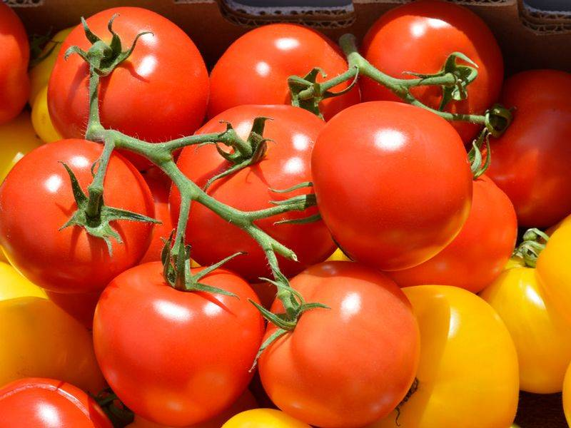 Лучшие сорта штамбовых томатов, как их формировать и выращивать