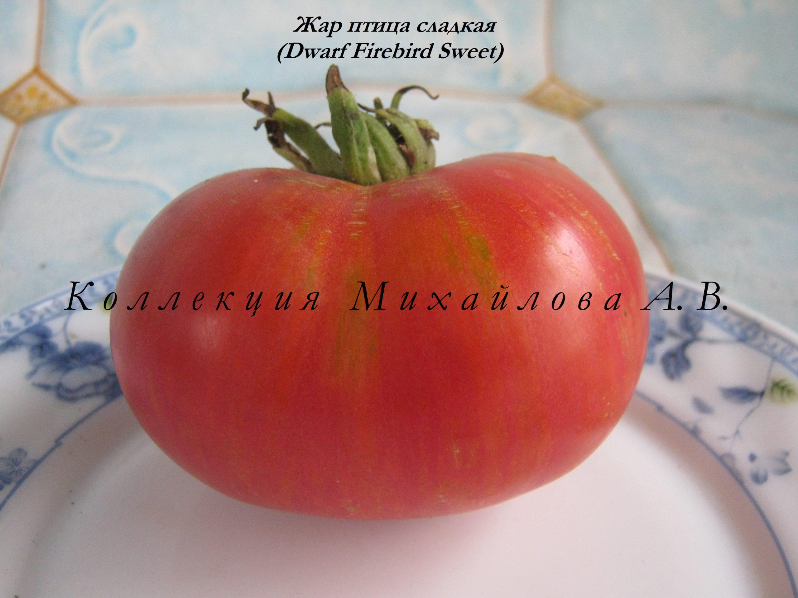 Томат огонь: отзывы, фото, урожайность, описание и характеристика | tomatland.ru