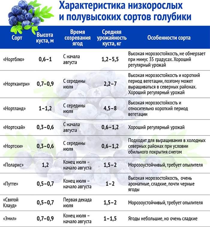 Низкорослые, среднерослые и высокорослые сорта голубики