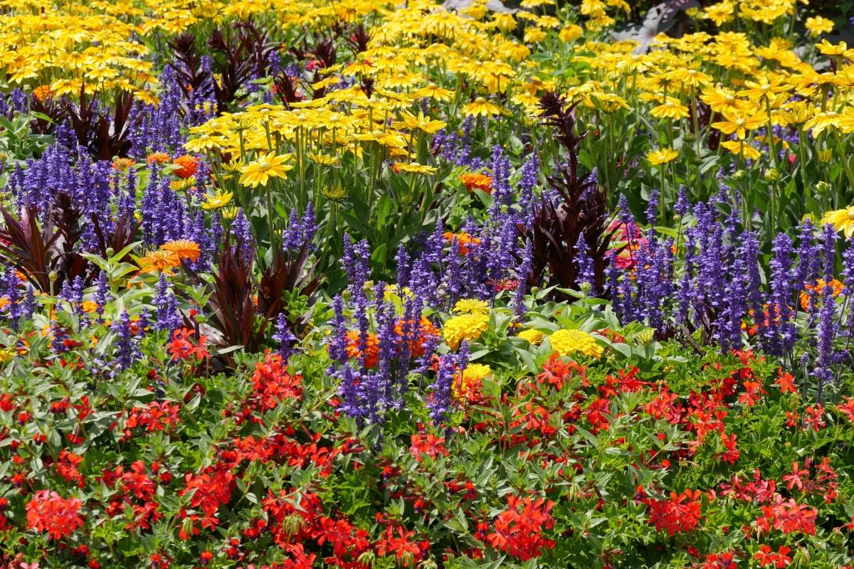 Что посеять на рассаду: однолетние цветы, список с названиями и фото