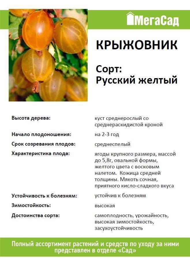 Сорта крыжовника с описанием, характеристикой и отзывами, в том числе для выращивания в подмосковье, средней полосе россии и других регионах