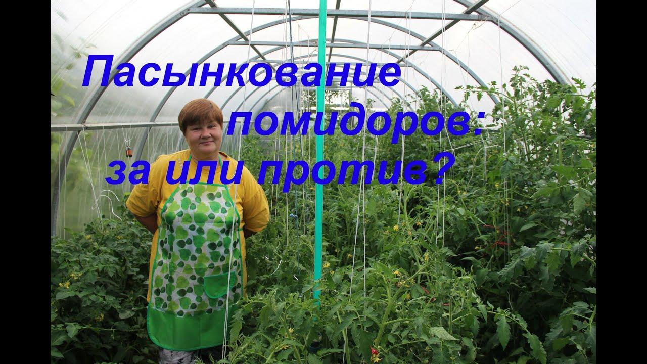 Юлия миняева - подкормка помидоров: пикировка томатов в улитку, посадка в пеленках, видео