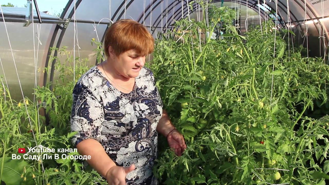 Как посадить помидоры в улитку Юлии Миняевой, пошаговое руководство