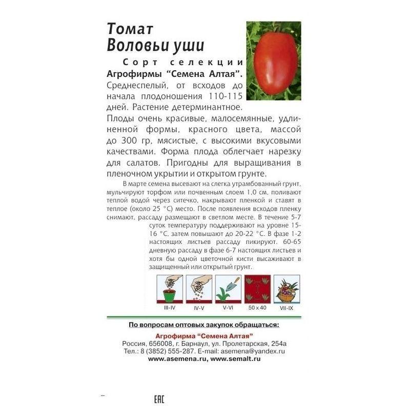 Описание редкого сорта томата Ослиные уши и правила агротехника