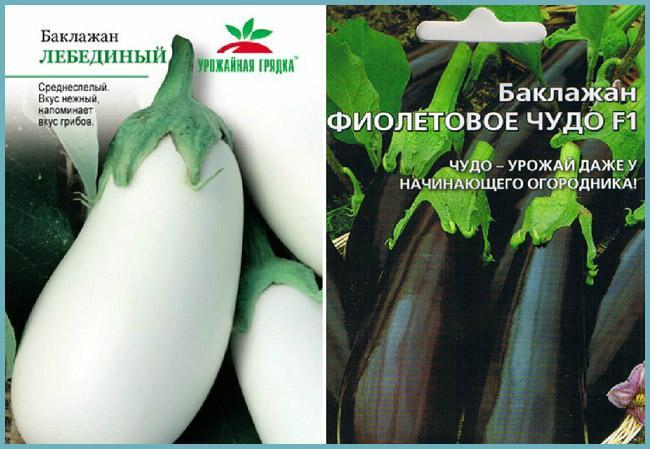 Баклажаны в домашней теплице: выращивание и уход