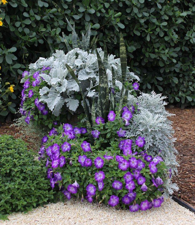 Высокие садовые цветы: разновидности и описание