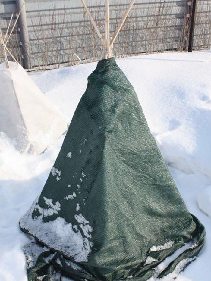Как укрыть яблони на зиму – укрытия для молодых и взрослых деревьев