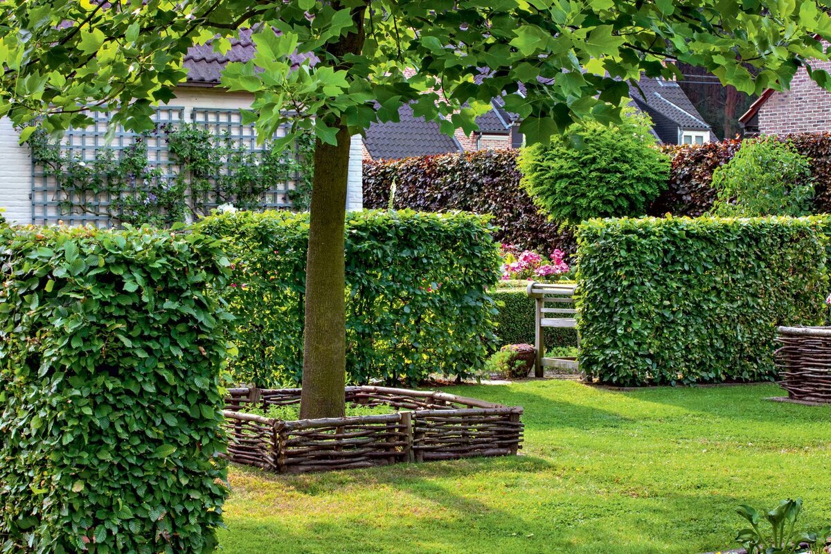 Как вырастить бамбук в открытом грунте и дома? полезные советы