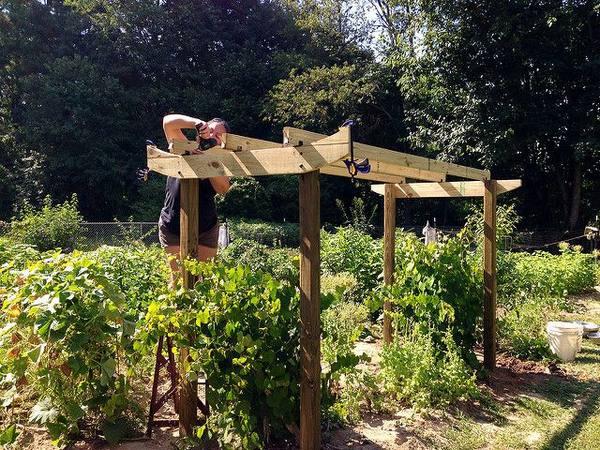 Варианты изготовления изгороди для винограда - 16 фото