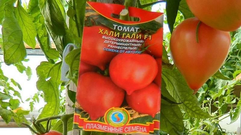 Томат хали-гали f1: описание сорта, отзыв, фото, урожайность